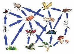 Food Web Interaction With Explanation Rain Forest